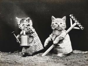 猫のお掃除写真