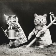 猫たちの みにゃんこハウスのお話