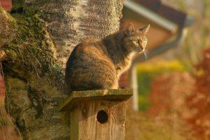 鳥の巣の上に乗る猫